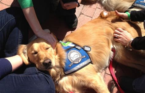 k 9 comfort dogs wearing their signature quot pet me quot blue signs the 60