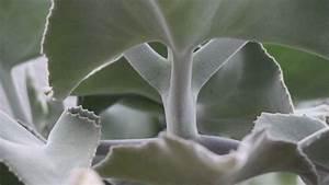 Pflanzen Für Innen : best pflanzen f r innen ideas ~ Michelbontemps.com Haus und Dekorationen