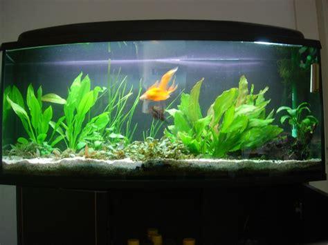 question voile de chine aquariums et vivariums forum