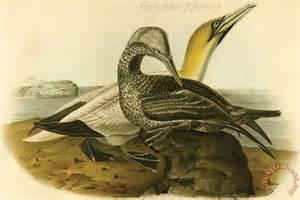 John James Audubon Paintings