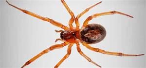 Faire Fuir Les Araignées : infestation araign e qu bec comment faire ~ Melissatoandfro.com Idées de Décoration