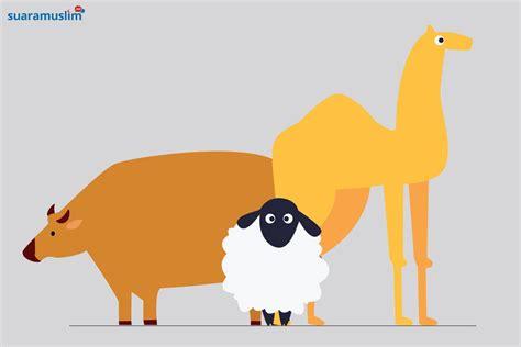 contoh gambar ilustrasi tentang hewan gambar ilustrasi