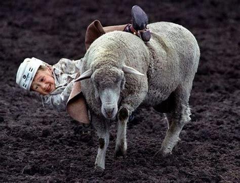 children riding sheep barnorama