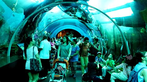 file sea aquarium jpg wikimedia commons