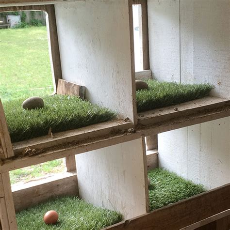 home design hacks chicken coop upgrade astroturf lined nesting boxes hawk