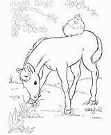 Coloring Colorare Cavallo Horse Tinkerbell Treasure Lost Disegno Puledro Printable Lab Related Coloringhome Cavaliere Sella Maneggio Nel Becuo Drawings Simple sketch template