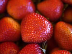 Faire Pousser Des Fraises : conseils sur la cultivation de fraises et comment apprendre a faire pousser des ~ Melissatoandfro.com Idées de Décoration