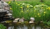 Bog Plants~ Water Irises