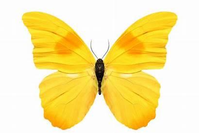 Yellow Butterfly Schmetterling Gelb Stockfotos Marienkaefer