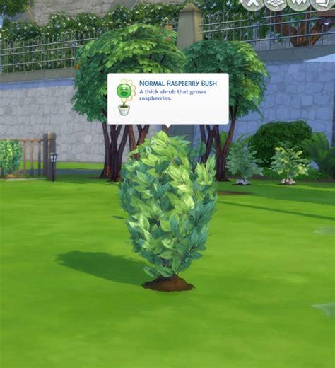 Harvestable Raspberry Plant by icemunmun at Mod The Sims