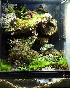 L Form Aquarium : die besten 25 vivarium ideen auf pinterest aquarium aquarien und erstaunliche aquarien ~ Sanjose-hotels-ca.com Haus und Dekorationen