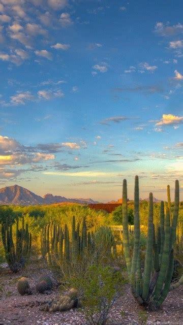 landscape nature desert cactus mountain arizona wallpapers hd desktop background