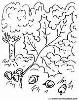 Oak Coloring Pages Leaf Template Vines Acorn Tree Hamilton Drawing Leaves Getdrawings Printable Templates Getcolorings Nature Sketch Alexander Lea sketch template