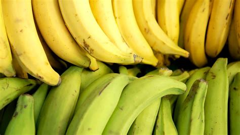 ¿Son los plátanos machos buenos para ti? - Consumer Reports