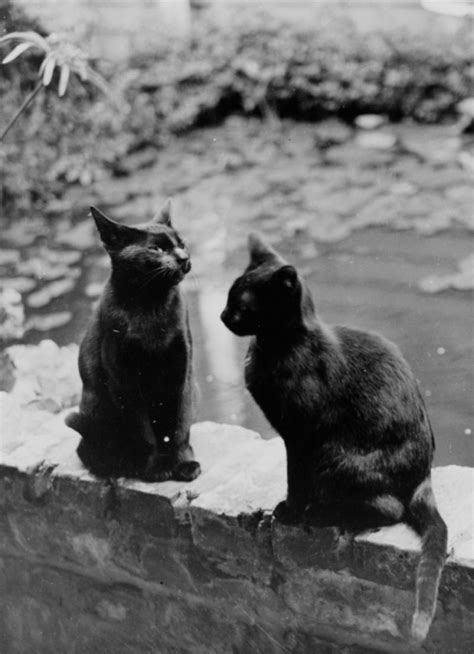 20 Lovely Vintage Photos Of Cats From The 1920s ~ Vintage