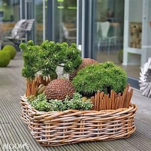 Winterpflanzen Für Balkonkästen : bepflanzungen f r balkon und terrasse im winter minigarden pinterest garten garten deko ~ Indierocktalk.com Haus und Dekorationen