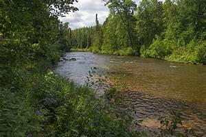 Life In The Taiga : the boreal forest biome ~ Frokenaadalensverden.com Haus und Dekorationen