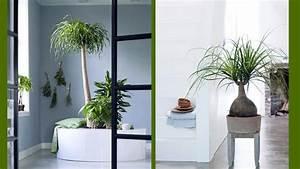 Plante D Intérieur Haute : de grandes plantes d int rieur pour janvier ~ Premium-room.com Idées de Décoration
