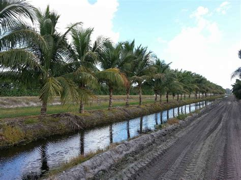 beefy tree farm plantantcom