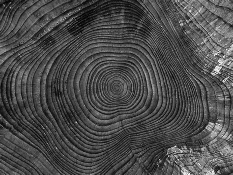 Abstract Black And White Photography Nature by Free Images Nature Abstract Black And White Wood