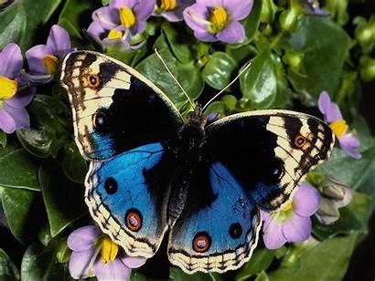 Butterfly Butterflies Colorful Wallpapers Pretty Butterflys Moth
