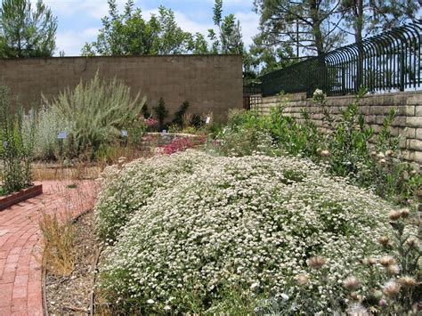 mother natures backyard  water wise garden plant