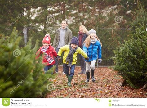outdoor family choosing christmas tree  stock