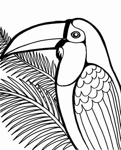Coloring Bird Pages Toucan Birds Books Quiz