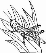 Grass Coloring Grasshopper Pages Drawing Perch Grasshoppers Tall Bug Outline Template Long Printable Drawings Getdrawings Sketch Bugs Predator Garden Items sketch template