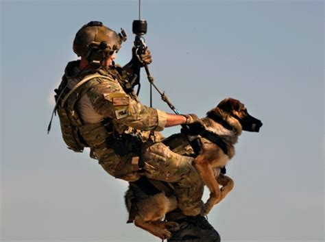 military dogs barkpost