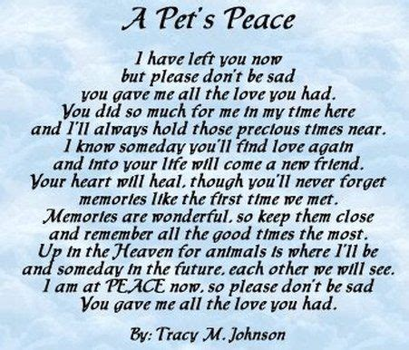 words of comfort for loss of pet pet loss how to cope helping children cope with the loss