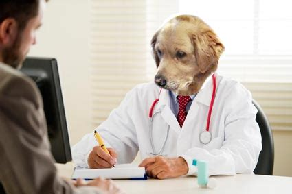 Dog Doctor Meme - doctor dog no idea what i m doing blank template imgflip