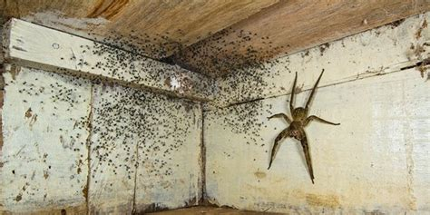 Spinne Im Zimmer spinne im zimmer schockt