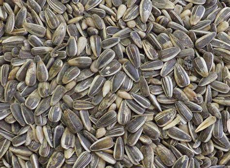 striped black sunflower seeds twootz com