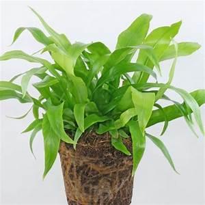 Pflanzen Bestimmen Nach Bildern : pflanzenbestimmung ~ Eleganceandgraceweddings.com Haus und Dekorationen