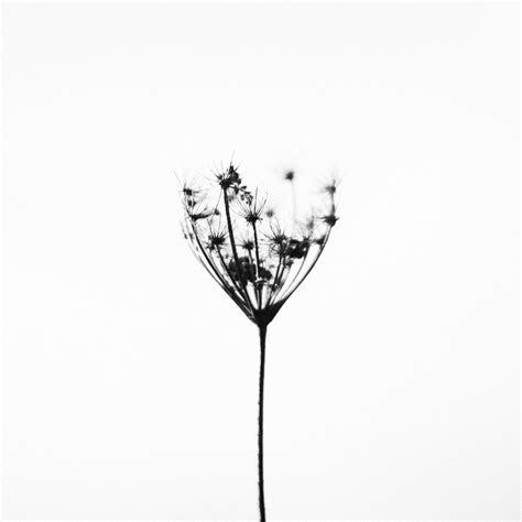 Schwarz Weiß Kontrast Bilder by Kostenlose Foto Natur Draussen Schwarz Und Wei 223