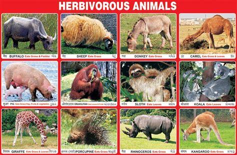 animals herbivorous chart animal carnivores carnivorous omnivorous herbivores spectrum types example charts pet diet plants fact species educational horse habitat
