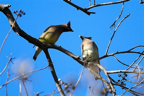 17 best images about arboretum birds on pinterest herons