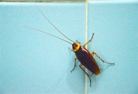 common household pest  allergy golden pest control