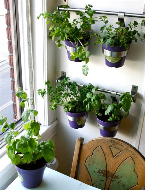 herb garden indoor kitchen herbs to grow homesfeed