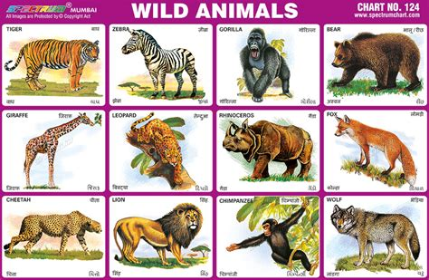 spectrum educational charts chart  wild animals