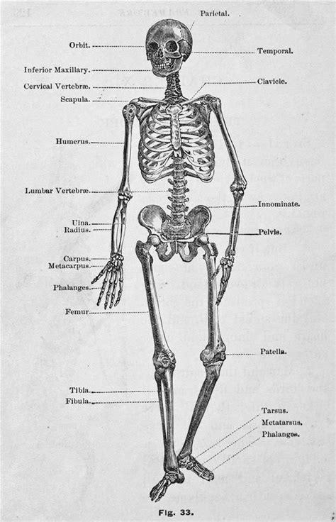 Body Parts Bones Diagram