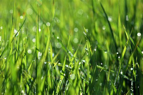 grass fresh dew morning yyy