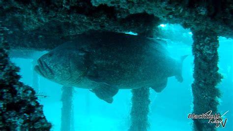grouper goliath hotel