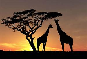 african tree silhouette MEMEs