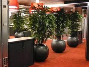 Plante D Intérieur Haute : plante interieure haute l 39 atelier des fleurs ~ Dode.kayakingforconservation.com Idées de Décoration