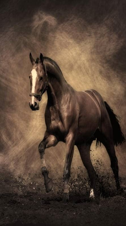 horse wallpapers   zedge