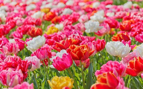 gambar jenis jenis bunga terindah berbagai penjuru