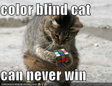 are cats color blind puzzled smiles and giggles cats and colors