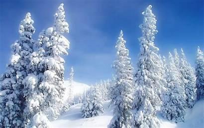 Snowy Trees Wallpapers Desktop 1920 1080